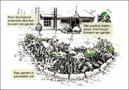 Rain Gardens and Bioswales